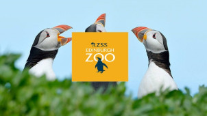 Up to 10% Off Online Advance Tickets at Edinburgh Zoo